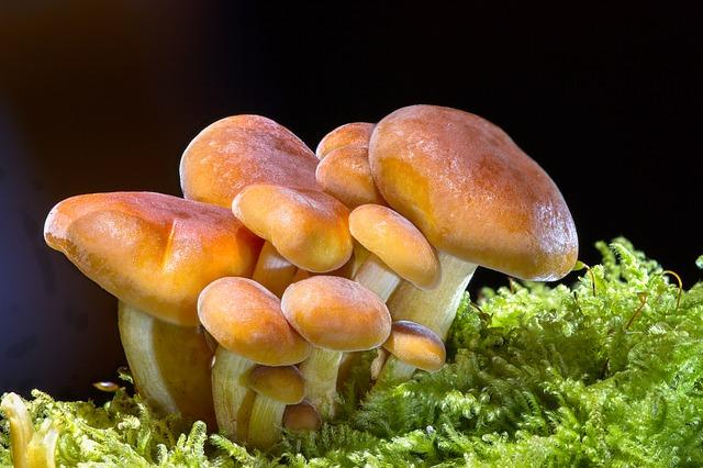 suszenie grzybów w piekarniku na papierze